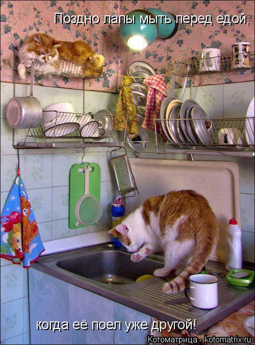 Котоматрица: Поздно лапы мыть перед едой, когда её поел уже другой!
