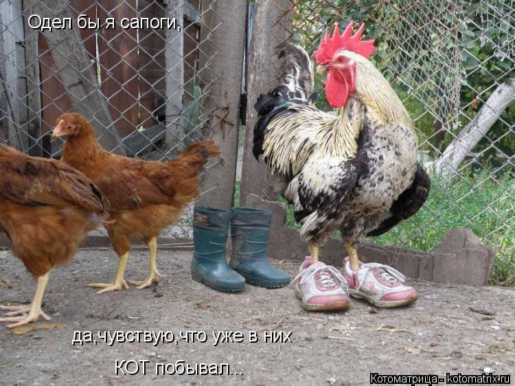 Котоматрица: Одел бы я сапоги, да,чувствую,что уже в них КОТ побывал...