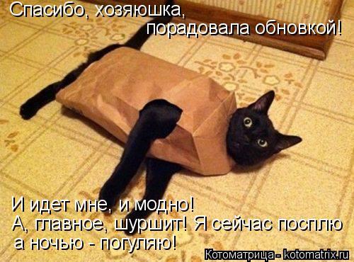 Котоматрица: Спасибо, хозяюшка,  порадовала обновкой! И идет мне, и модно! А, главное, шуршит! Я сейчас посплю а ночью - погуляю!