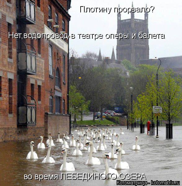 Котоматрица: Плотину прорвало? Нет,водопровод в театре оперы и балета во время ЛЕБЕДИНОГО ОЗЕРА