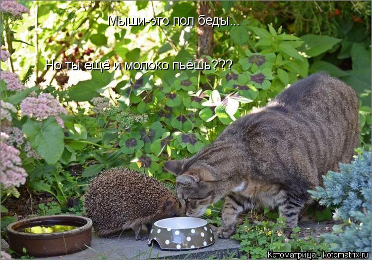 Котоматрица: Мыши-это пол беды... Но ты ещё и молоко пьёшь???