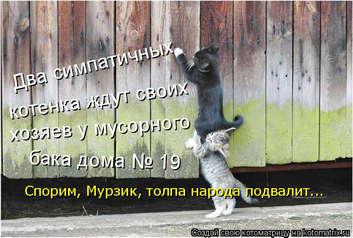Котоматрица: Спорим, Мурзик, толпа народа подвалит... хозяев у мусорного  котенка ждут своих  бака дома № 19 Два симпатичных