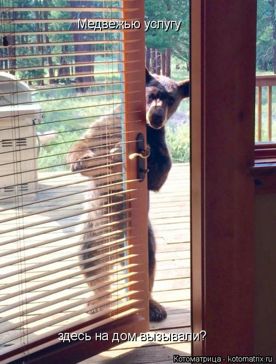 Котоматрица: Медвежью услугу здесь на дом вызывали?