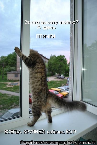 Котоматрица: За что высоту люблю? А здесь  ВСЕГДА  КРУПНЕЙ  собачек. ВОТ! птички