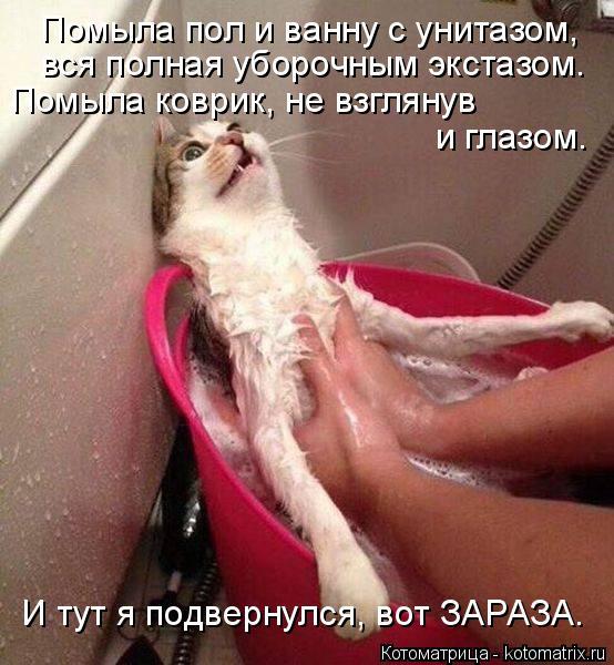 Котоматрица: Помыла пол и ванну с унитазом, вся полная уборочным экстазом. Помыла коврик, не взглянув  и глазом. И тут я подвернулся, вот ЗАРАЗА.