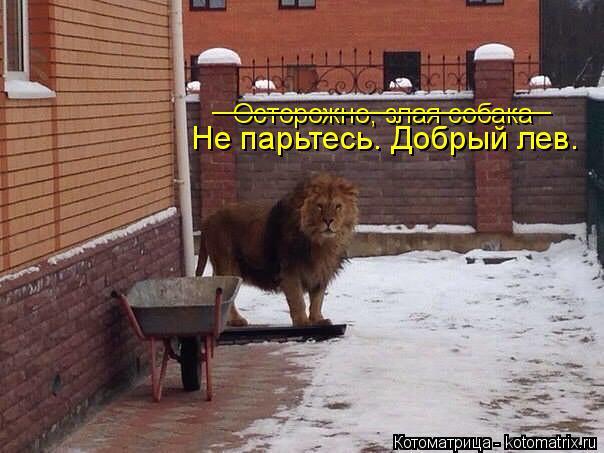 Котоматрица: Осторожно, злая собака _______________________ Не парьтесь. Добрый лев.