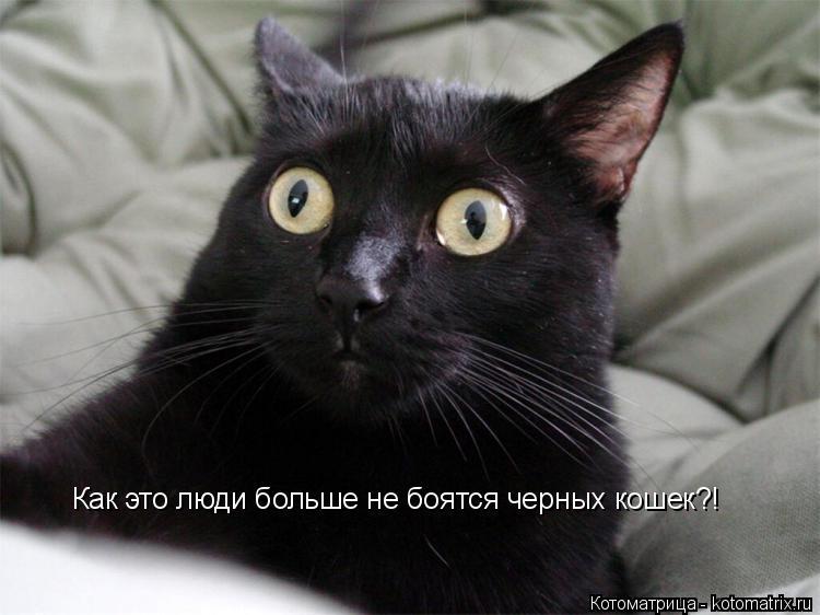 Котоматрица: Как это люди больше не боятся черных кошек?!