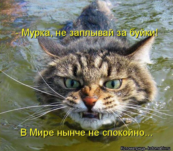 Котоматрица: - Мурка, не заплывай за буйки!  В Мире нынче не спокойно...