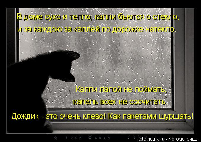 Котоматрица: Дождик - это очень клево! Как пакетами шуршать! В доме сухо и тепло, капли бьются о стекло,  и за каждою за каплей по дорожке натекло. Капли лап