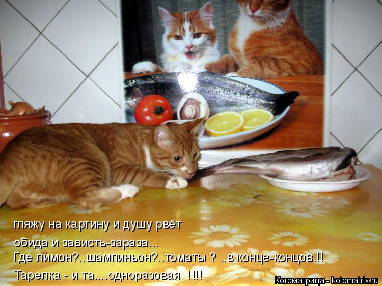 Котоматрица: гляжу на картину и душу рвёт обида и зависть-зараза... Где лимон?..шампиньон?..томаты ? ..в конце-концов.!! Тарелка - и та....одноразовая  !!!!