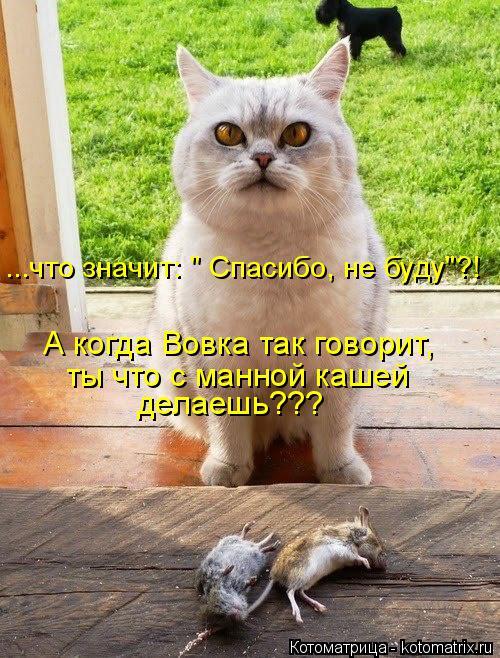 """Котоматрица: ...что значит: """" Спасибо, не буду""""?! А когда Вовка так говорит, ты что с манной кашей делаешь???"""