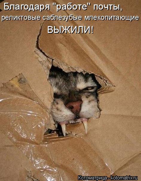 """Котоматрица: Благодаря """"работе"""" почты,  реликтовые саблезубые млекопитающие   ВЫЖИЛИ!"""