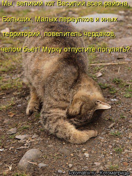 Котоматрица: Мы, великий кот Василий всея района, территорий, повелитель чердаков,  челом бьёт! Мурку отпустите погулять? Больших, Малых переулков и иных