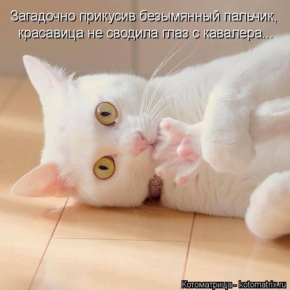 http://kotomatrix.ru/images/lolz/2016/06/18/kotomatritsa_nw.jpg