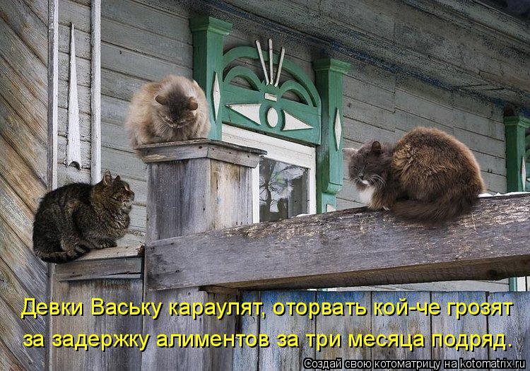 Котоматрица: Девки Ваську караулят, оторвать кой-че грозят за задержку алиментов за три месяца подряд.