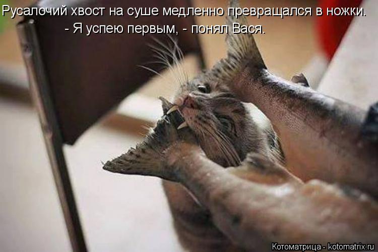 Котоматрица: Русалочий хвост на суше медленно превращался в ножки. - Я успею первым, - понял Вася.