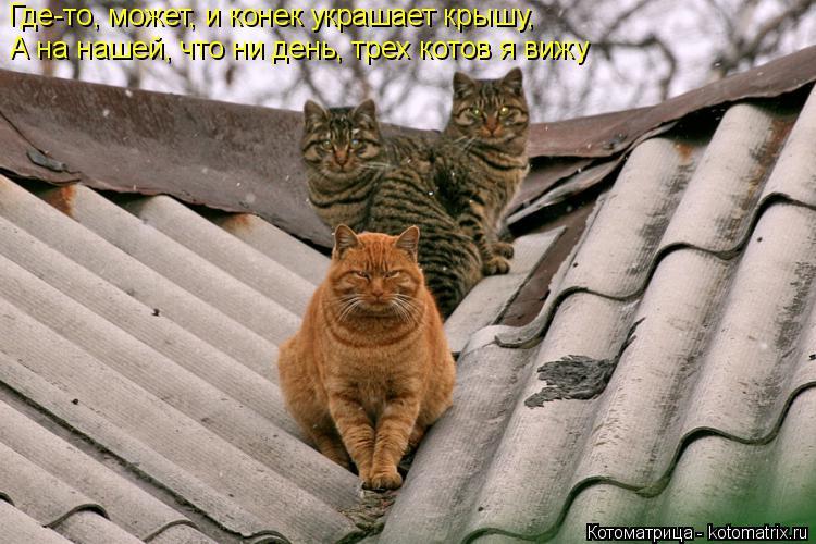 Котоматрица: Где-то, может, и конек украшает крышу, А на нашей, что ни день, трех котов я вижу