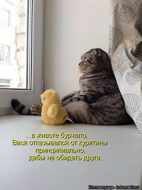 Котоматрица: ...в животе бурчало, Вася отказывался от курятины принципиально, дабы не обидеть друга.