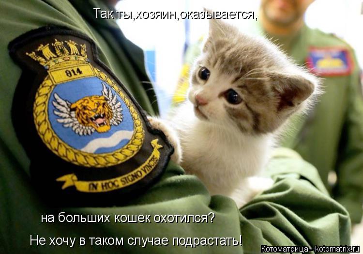 Котоматрица: Так ты,хозяин,оказывается, на больших кошек охотился? Не хочу в таком случае подрастать!