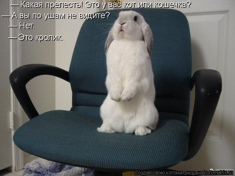 Котоматрица: — Какая прелесть! Это у вас кот или кошечка? — А вы по ушам не видите? — Нет.  — Это кролик.