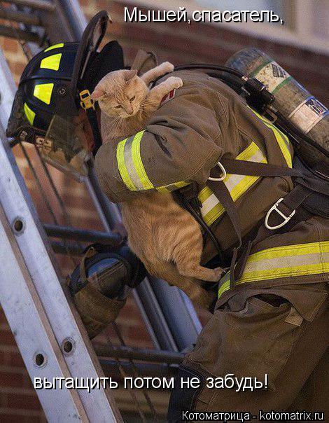 Котоматрица: Мышей,спасатель, вытащить потом не забудь!