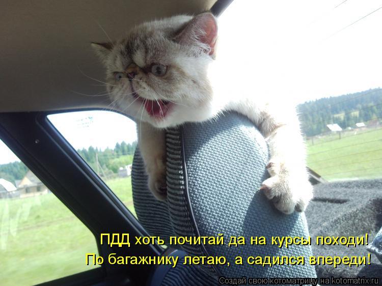 Котоматрица: ПДД хоть почитай да на курсы походи! По багажнику летаю, а садился впереди!