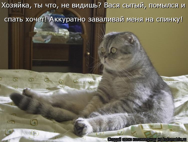 Котоматрица: Хозяйка, ты что, не видишь? Вася сытый, помылся и спать хочет! Аккуратно заваливай меня на спинку!