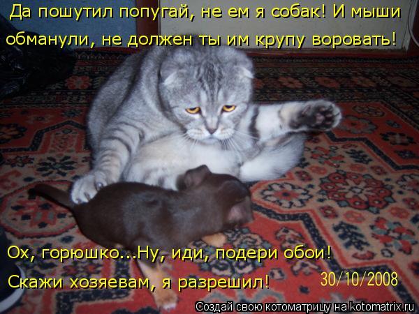Котоматрица: Да пошутил попугай, не ем я собак! И мыши  обманули, не должен ты им крупу воровать! Ох, горюшко...Ну, иди, подери обои!  Скажи хозяевам, я разреш