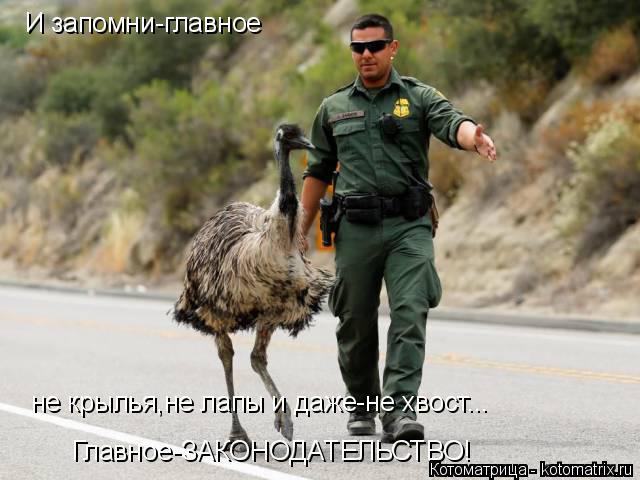 Котоматрица: И запомни-главное не крылья,не лапы и даже-не хвост... Главное-ЗАКОНОДАТЕЛЬСТВО!