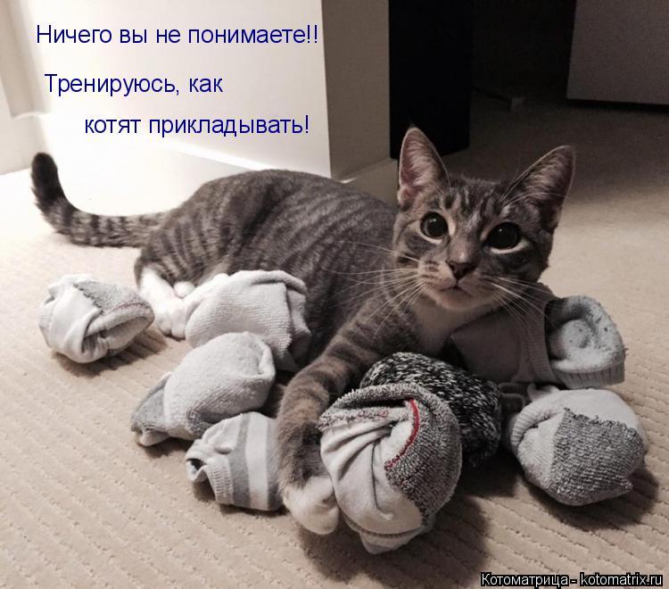 Котоматрица: Ничего вы не понимаете!! Тренируюсь, как котят прикладывать!