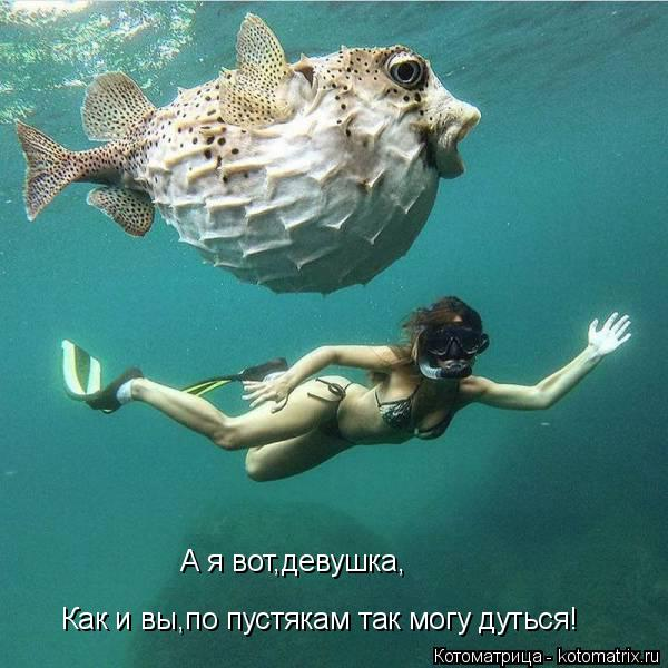 Котоматрица: А я вот,девушка, Как и вы,по пустякам так могу дуться!
