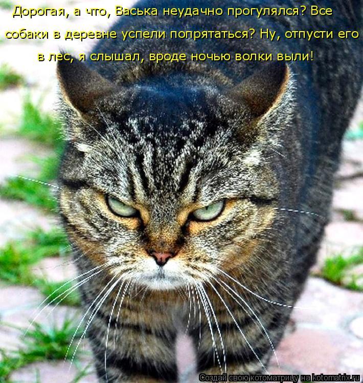 Котоматрица: Дорогая, а что, Васька неудачно прогулялся? Все  собаки в деревне успели попрятаться? Ну, отпусти его  в лес, я слышал, вроде ночью волки выли!