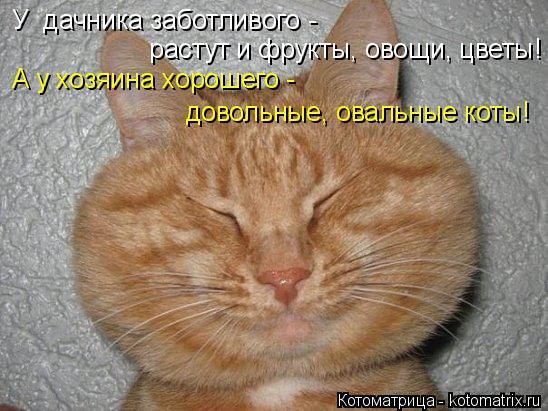 Котоматрица: У  дачника заботливого -   растут и фрукты, овощи, цветы! А у хозяина хорошего -  довольные, овальные коты!