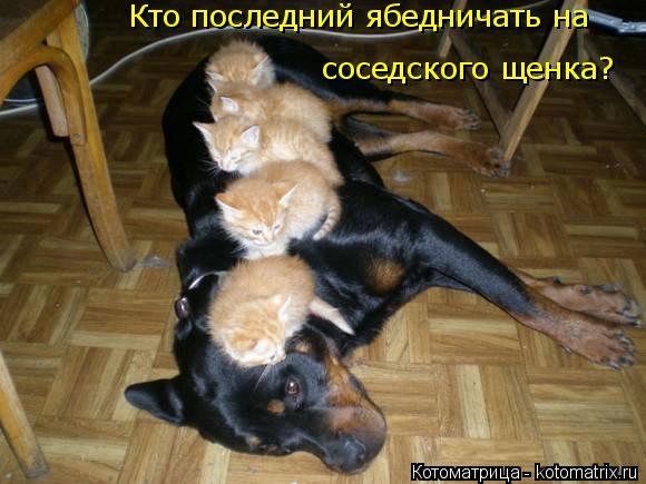 Котоматрица: Кто последний ябедничать на  соседского щенка?
