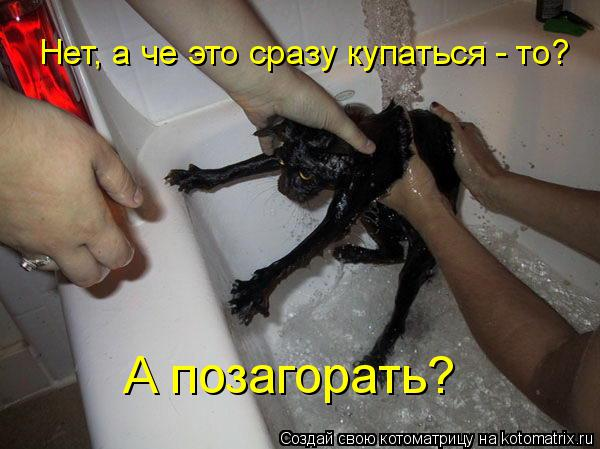 Котоматрица: А позагорать? Нет, а че это сразу купаться - то?
