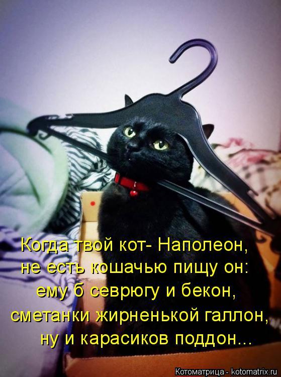 Котоматрица: Когда твой кот- Наполеон,  не есть кошачью пищу он: ему б севрюгу и бекон, сметанки жирненькой галлон, ну и карасиков поддон...
