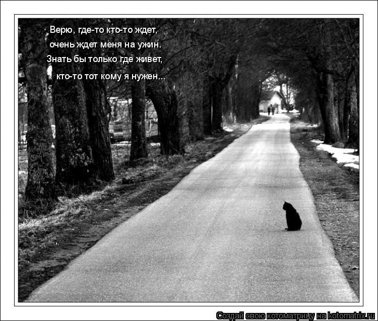 Котоматрица: Верю, где-то кто-то ждет, очень ждет меня на ужин. Знать бы только где живет, кто-то тот кому я нужен...