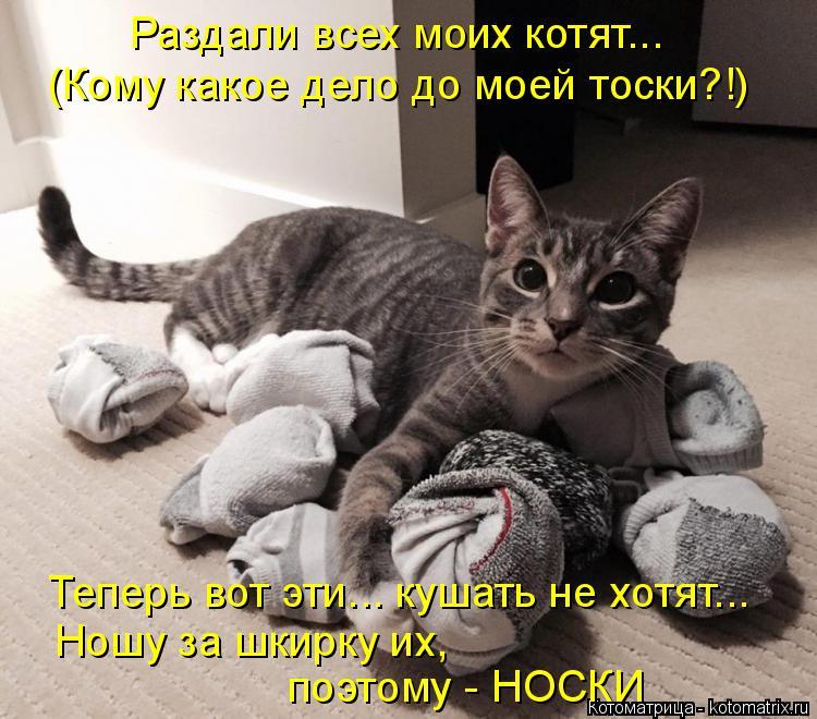 Котоматрица: Раздали всех моих котят... (Кому какое дело до моей тоски?!) Теперь вот эти... кушать не хотят... Ношу за шкирку их, поэтому - НОСКИ