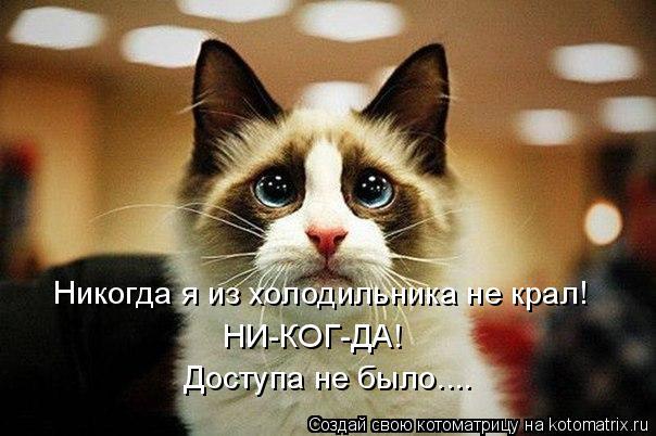 Котоматрица: Никогда я из холодильника не крал! НИ-КОГ-ДА! Доступа не было....