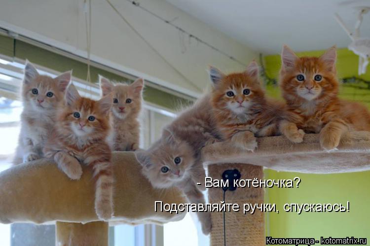 Котоматрица: - Вам котёночка? Подставляйте ручки, спускаюсь!