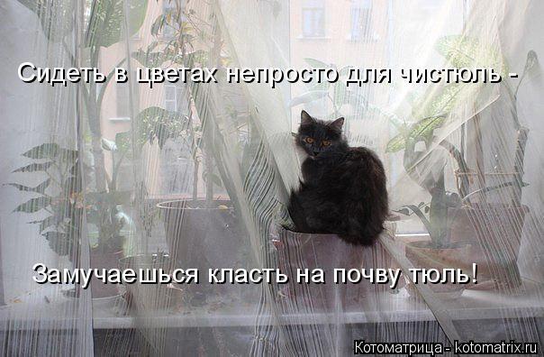 Котоматрица: Сидеть в цветах непросто для чистюль - Замучаешься класть на почву тюль!