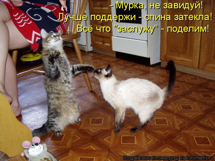 """Котоматрица: - Мурка, не завидуй! Лучше поддержи - спина затекла! Всё что """"заслужу"""" - поделим!"""