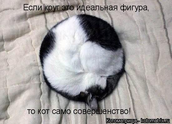 Котоматрица: Если круг это идеальная фигура, то кот само совершенство!