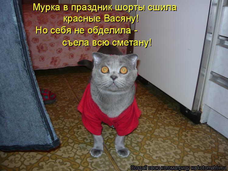 Котоматрица: Мурка в праздник шорты сшила красные Васяну! съела всю сметану!  Но себя не обделила -