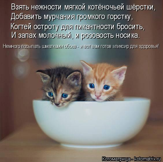Котоматрица: Взять нежности мягкой котёночьей шёрстки, Добавить мурчания громкого горстку, Когтей остроту для пикантности бросить, И запах молочный, и
