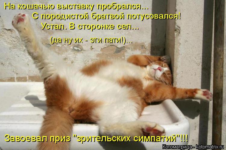 """Котоматрица: На кошачью выставку пробрался... С породистой братвой потусовался! Устал. В сторонке сел...  (да ну их - эти пати!)... Завоевал приз """"зрительских"""
