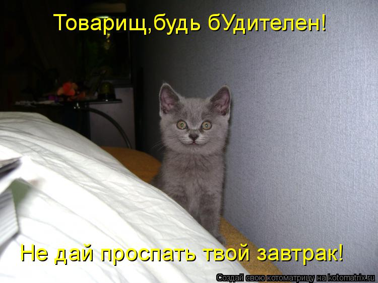 Котоматрица: Товарищ,будь бУдителен! Не дай проспать твой завтрак!