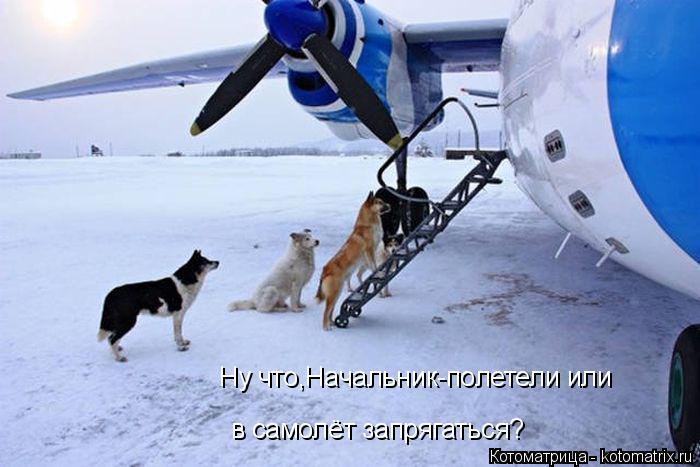 Котоматрица: Ну что,Начальник-полетели или в самолёт запрягаться?