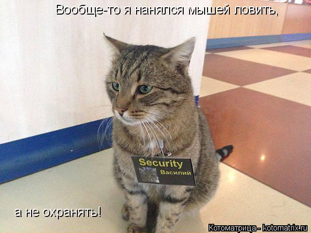 Котоматрица: Вообще-то я нанялся мышей ловить, а не охранять!