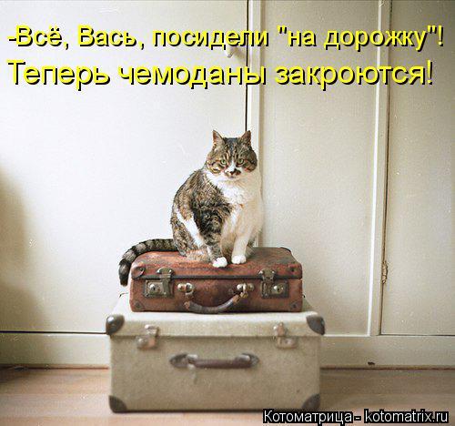 """Котоматрица: Теперь чемоданы закроются! -Всё, Вась, посидели """"на дорожку""""!"""